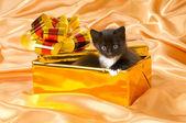 Fluffy little kitten — Stock Photo