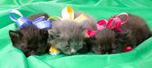 Fluffy little kittens — Stock Photo