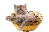 Litle cat — Stock Photo