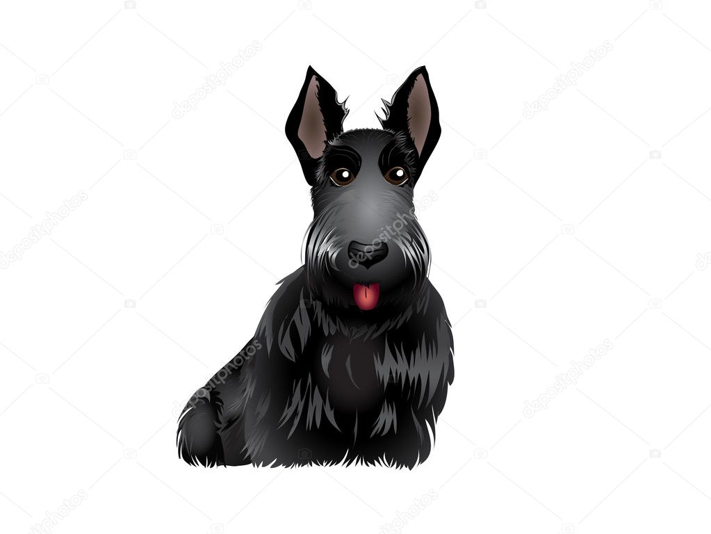 Black Scottish Terrier vector illustration eps 10 — Stock Vector #8883579