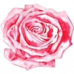 Romantic watercolor rose — Stock Vector #9766099