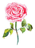 Romantische aquarel rose — Stockvector