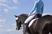 Equestrian horse against a blue sky — Stock Photo