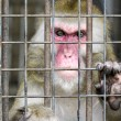 Monkey in a cage with sad eyes — 图库照片