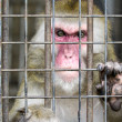 Monkey in a cage with sad eyes - Stock Photo