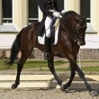 Dressage horse and rider — Stock Photo