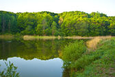 The wood lake in a sunny day — Stock Photo