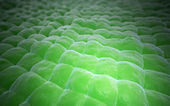 Plant tissue close-up — Stockfoto
