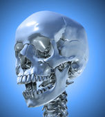 Human skull with a slightly open jaw — Stock Photo