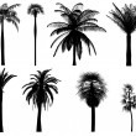 Palm tree silhouettes — Stock Photo #8021921