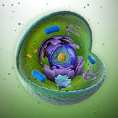 Animal cell cut-away - scientifically correct 3d illustration — ストック写真
