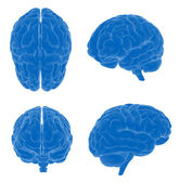 Human brain - different views — Stock Photo