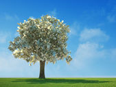 Money tree growing in the middle of a meadow — Stock Photo