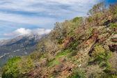 Mountain landscape in Montenegro — Stock Photo