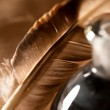 Feather and ink bottle — Stock Photo