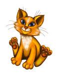 Male cat — Stock Photo