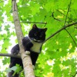 Funny cat is sitting on a tree like a bird - Stock Photo