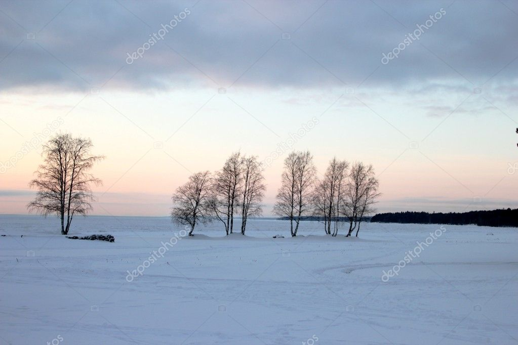 Winter landscape with a hint of lavender. Trees — Stock Photo #8545715