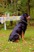 O cão sentado na grama — Foto Stock
