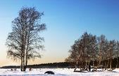 Zimowy pejzaż z drzewa — Zdjęcie stockowe