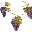 Set of bunches of grapes — Stock Photo