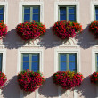 Close flower facade — Stock Photo #8044794
