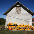Stock Photo: Pumpkin farmyard