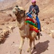 Stock Photo: Camel guide