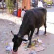 Stock Photo: Cow on street