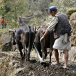Стоковое фото: Old man ploughing his field in nepal