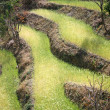 Rice paddy fields in the himalayan hills, nepal — 图库照片 #8047349