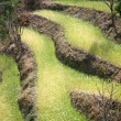 Стоковое фото: Rice paddy fields in the himalayan hills, nepal