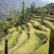 Rice paddy fields in the himalayan hills, nepal - Stock Photo