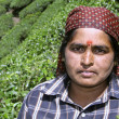 Woman at tea plantation, south india — Stock Photo