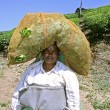 Female tea plantation worker carrying tea bag on her head — Stock Photo