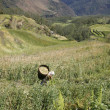 Stok fotoğraf: Female farmer carry rice load on back in field, nepal
