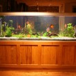 Fish tank at night in beautiful house - Stock Photo