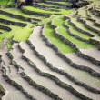 Rice paddy fields in the himalayan hills — Stockfoto