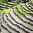 Rice paddy fields in the himalayan hills — Stock Photo