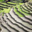 pirinç çeltik tarlaları Himalaya Hills — Stok fotoğraf