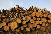 Toras de madeira no fundo do céu azul — Fotografia Stock