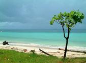árvore na praia, koh tao, tailândia — Foto Stock