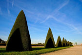 Cone trees in versailles — Stock Photo