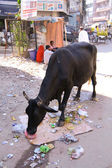 Cow on street — Stock Photo