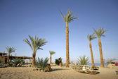 Palm trees on beach resort, red sea sinai, egypt — Stock Photo