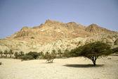 Palm trees in desert landscape dead sea region — Stock Photo