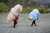 Porters carrying heavy loads on their back, annapurna, nepal — Stock Photo