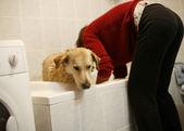 Dog in bathroom — Stock Photo