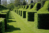 :schrubs shaped in perspective in the garden of eyrignac, france — Stock Photo