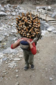 Carrying firewood — Stock Photo